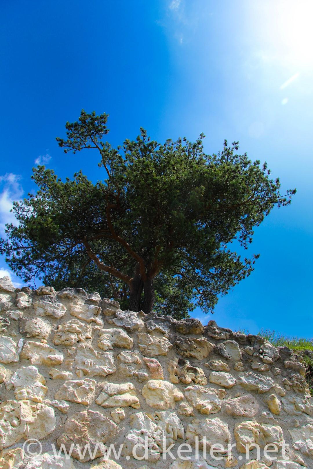 Baum im Stein