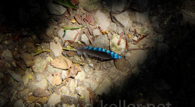 Neue Naturbilder #1 – Federn gelassen