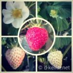 Erdbeeren Collage